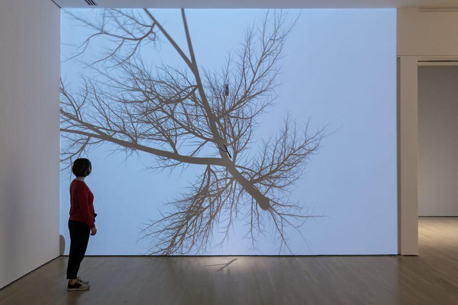Rafael Lozano-Hemmer, <em>Bifurcation</em>, 2012