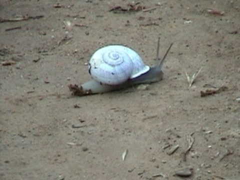 still of Snail, 2003, Color video, loop, 6 min 34 s, sound, Edition of 10.